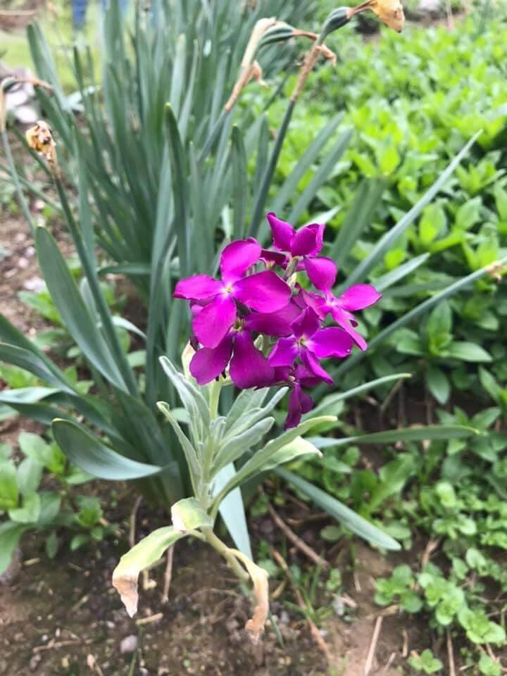Her Bahar Bir Çiçekle Başlar