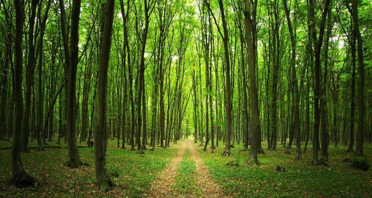 Biz bir ormanız